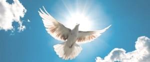 vain-traditions-dove